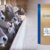 питание для коров